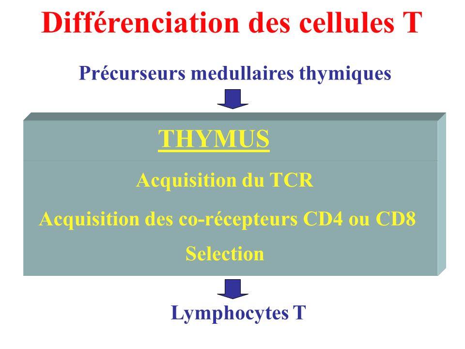 Acquisition des co-récepteurs CD4 ou CD8