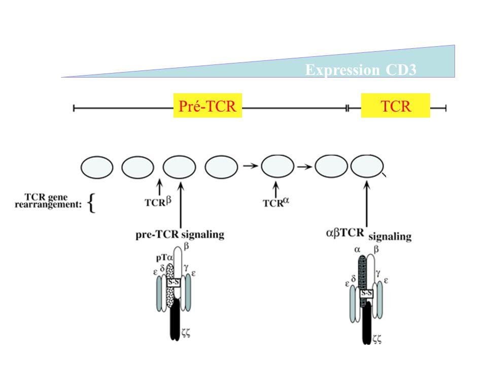 Expression CD3 Pré-TCR TCR