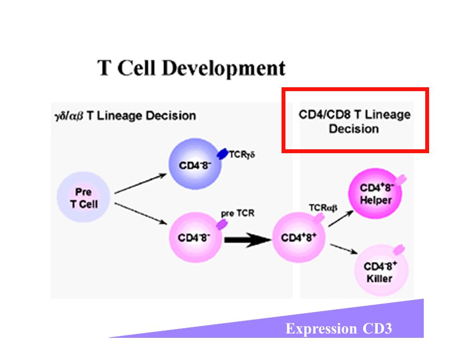 Expression CD3