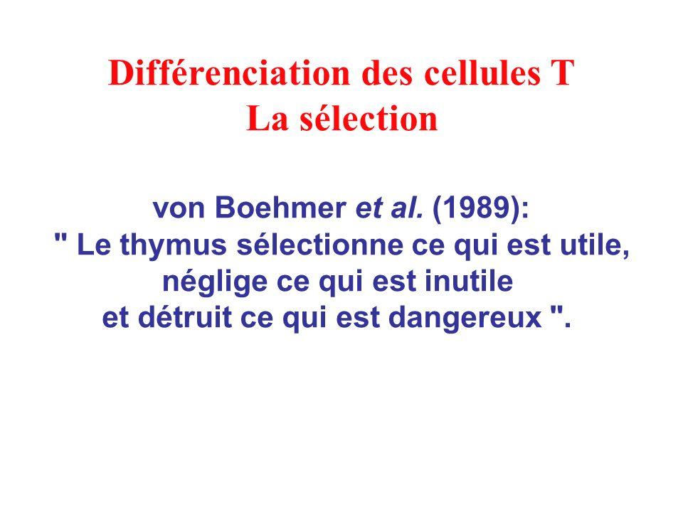 Différenciation des cellules T La sélection