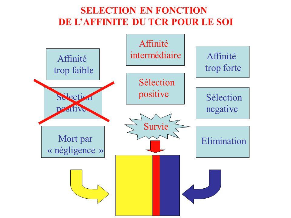 DE L'AFFINITE DU TCR POUR LE SOI