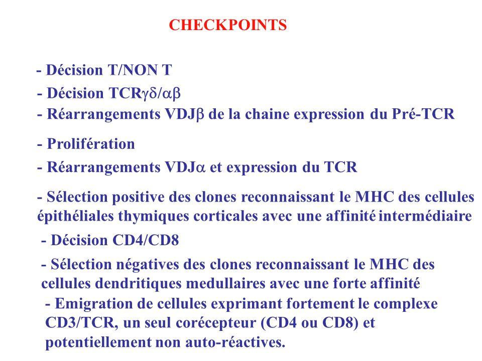 CHECKPOINTS - Décision T/NON T. - Décision TCRgd/ab. - Réarrangements VDJb de la chaine expression du Pré-TCR.