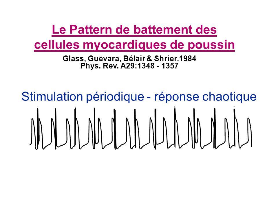 Le Pattern de battement des cellules myocardiques de poussin