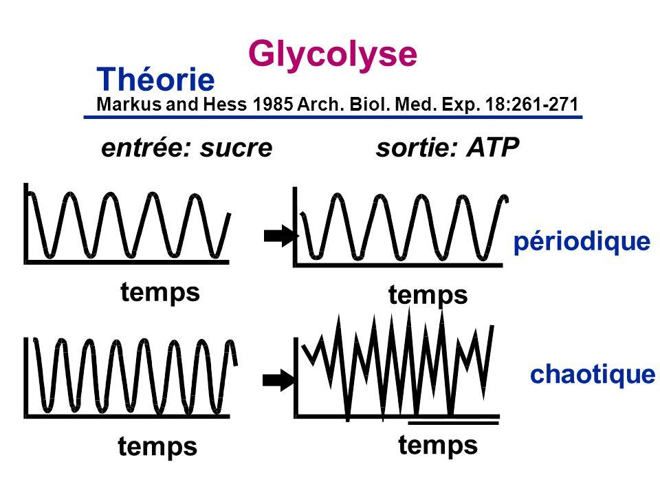 Glycolyse Théorie entrée: sucre sortie: ATP périodique temps temps