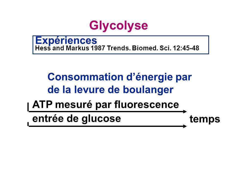 Glycolyse Expériences Consommation d'énergie par
