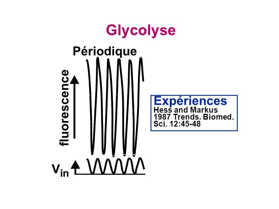 Glycolyse Périodique fluorescence Expériences Vin
