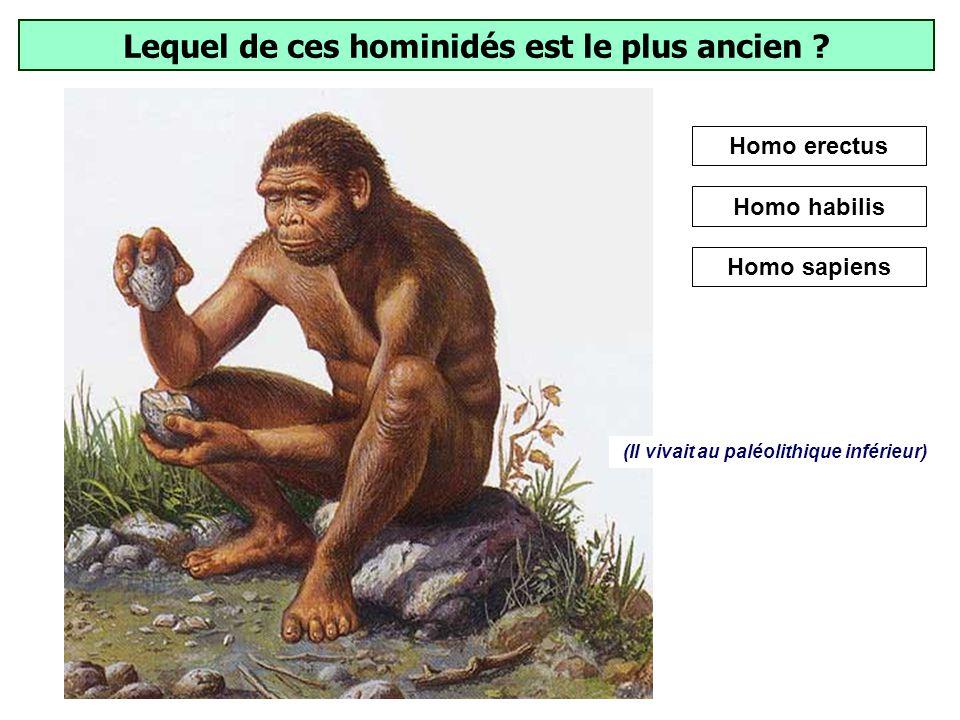 Lequel de ces hominidés est le plus ancien
