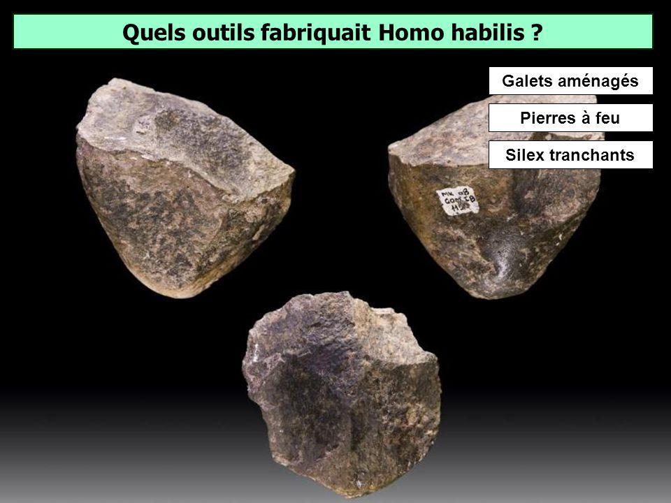 Quels outils fabriquait Homo habilis
