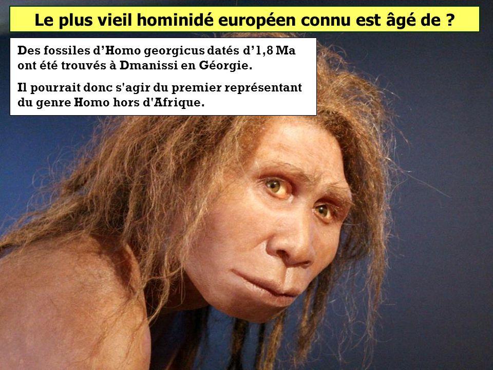 Le plus vieil hominidé européen connu est âgé de