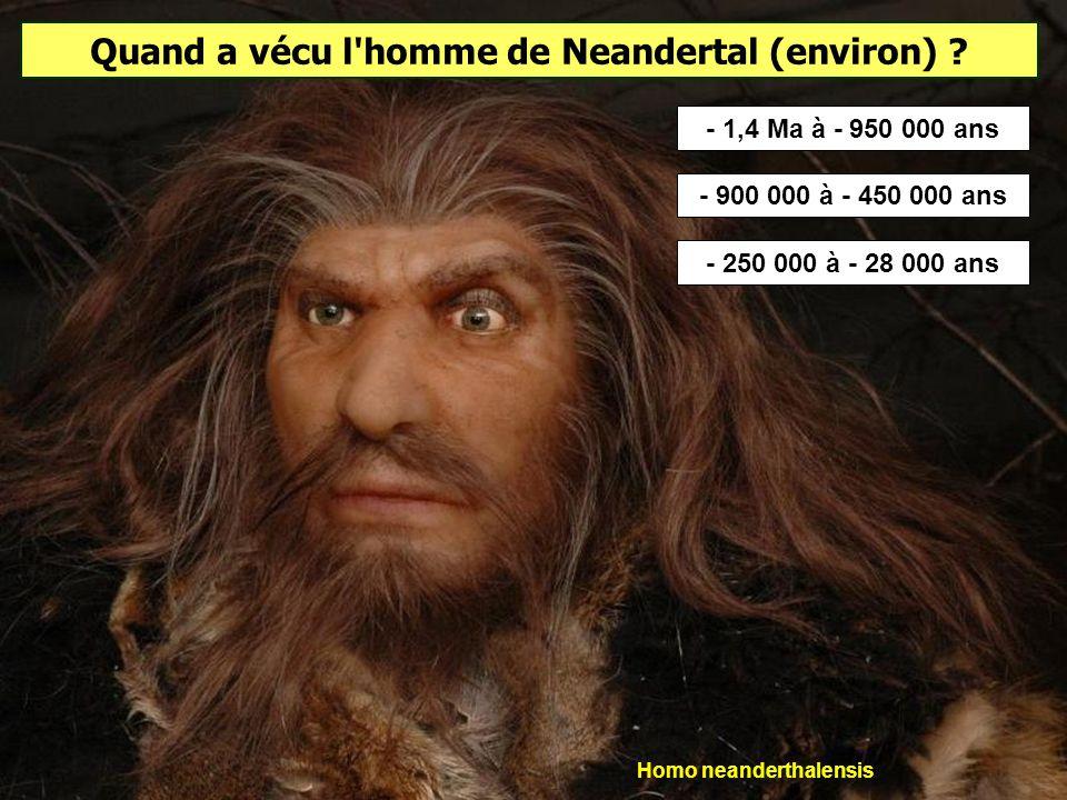 Quand a vécu l homme de Neandertal (environ) Homo neanderthalensis