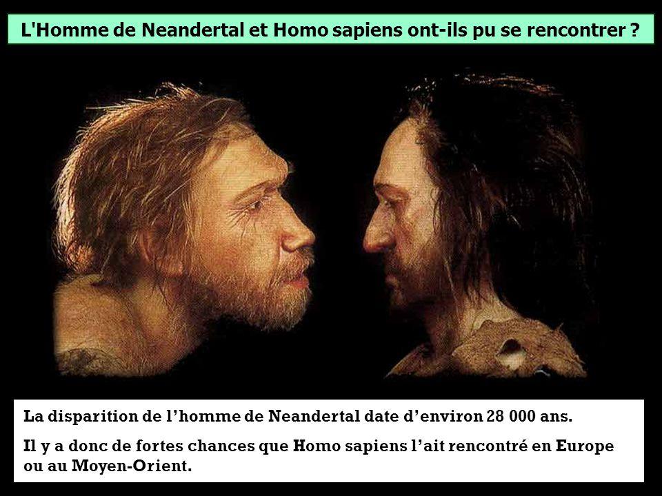 L Homme de Neandertal et Homo sapiens ont-ils pu se rencontrer