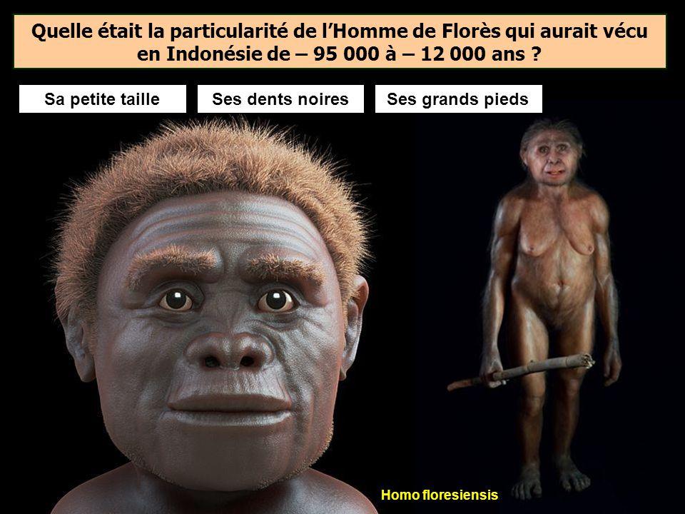 Quelle était la particularité de l'Homme de Florès qui aurait vécu en Indonésie de – 95 000 à – 12 000 ans