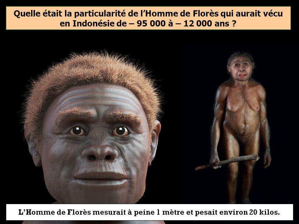 L'Homme de Florès mesurait à peine 1 mètre et pesait environ 20 kilos.
