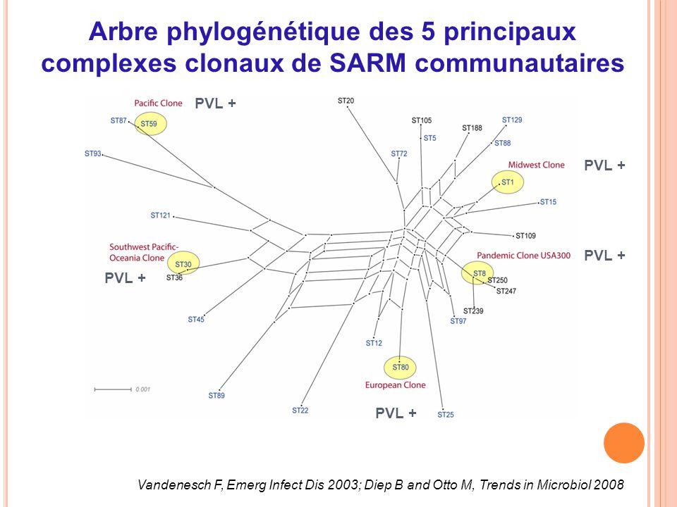 Arbre phylogénétique des 5 principaux complexes clonaux de SARM communautaires