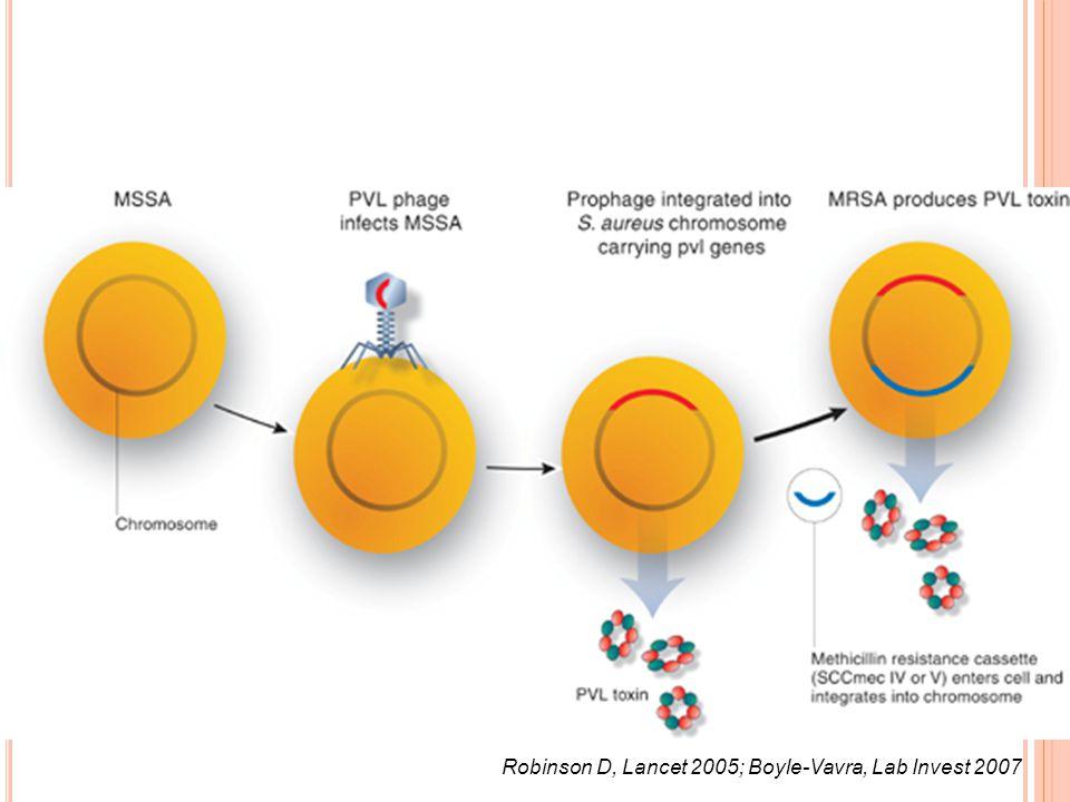 Robinson D, Lancet 2005; Boyle-Vavra, Lab Invest 2007