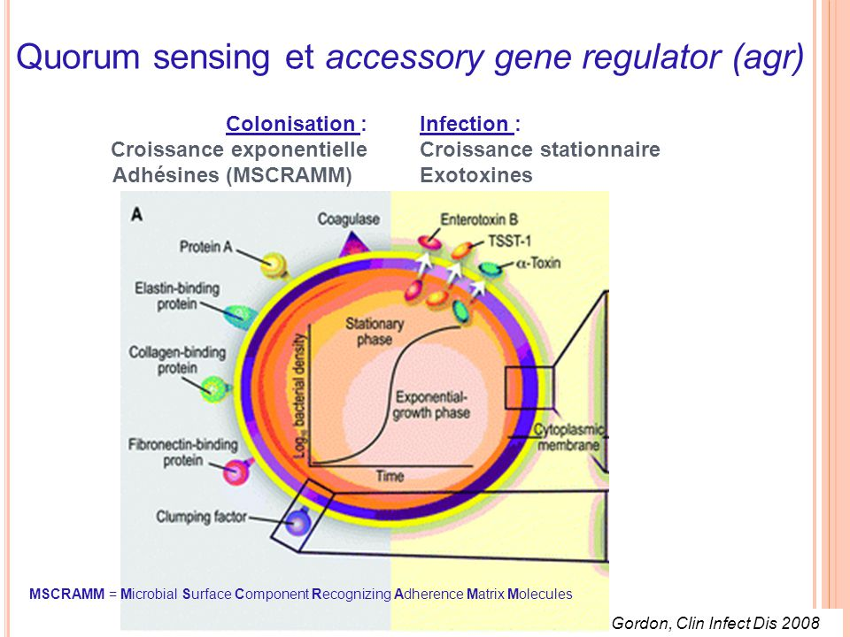 Quorum sensing et accessory gene regulator (agr)