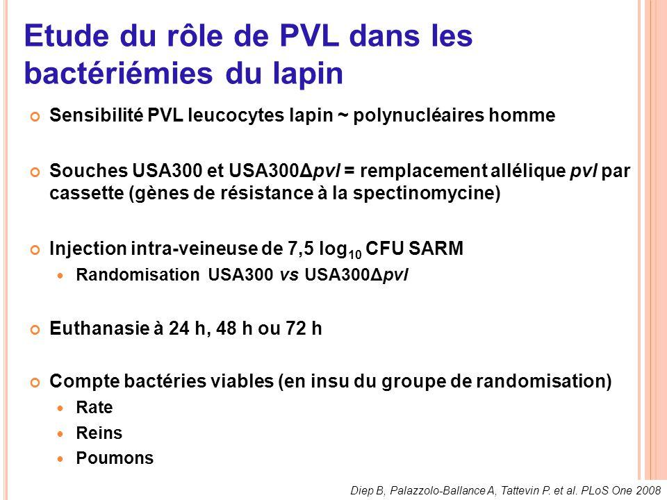 Etude du rôle de PVL dans les bactériémies du lapin