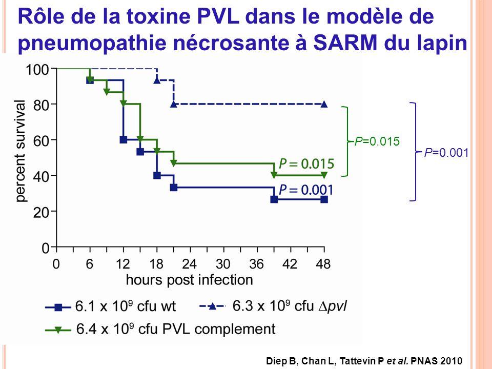Rôle de la toxine PVL dans le modèle de pneumopathie nécrosante à SARM du lapin