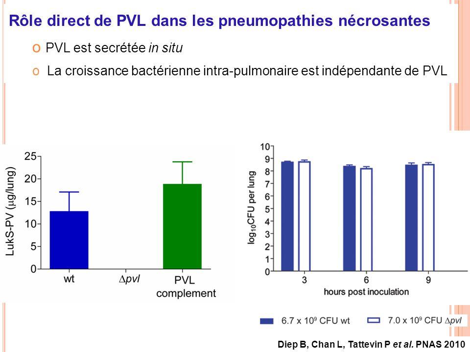 Rôle direct de PVL dans les pneumopathies nécrosantes