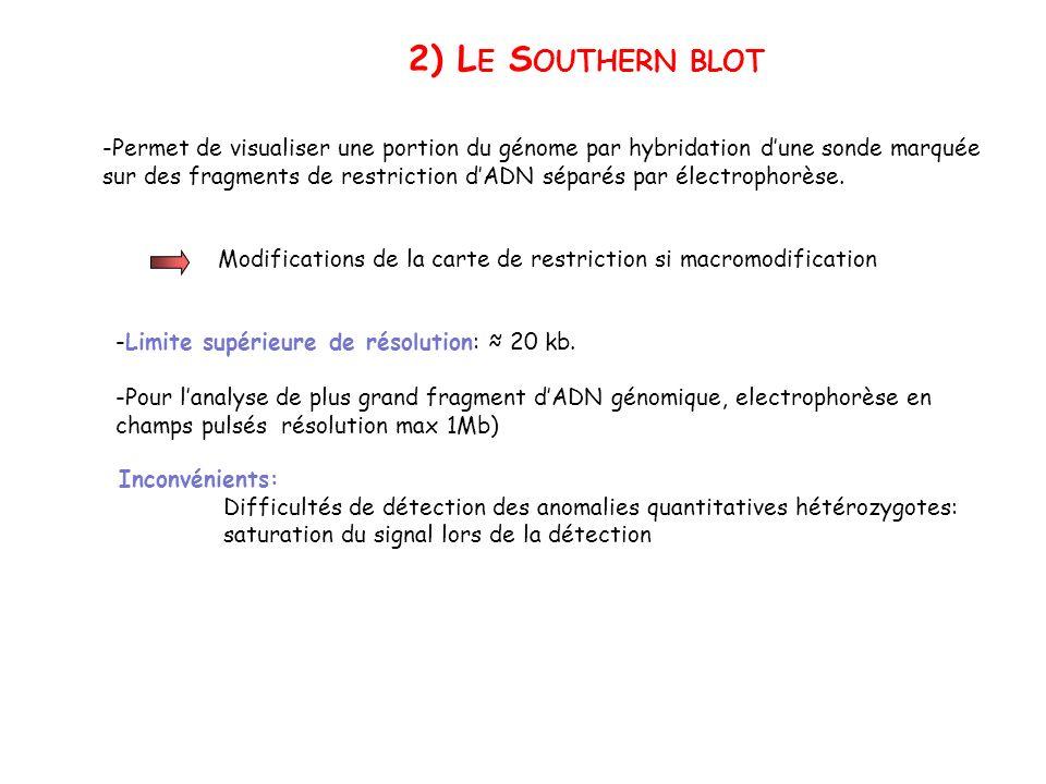 2) Le Southern blot