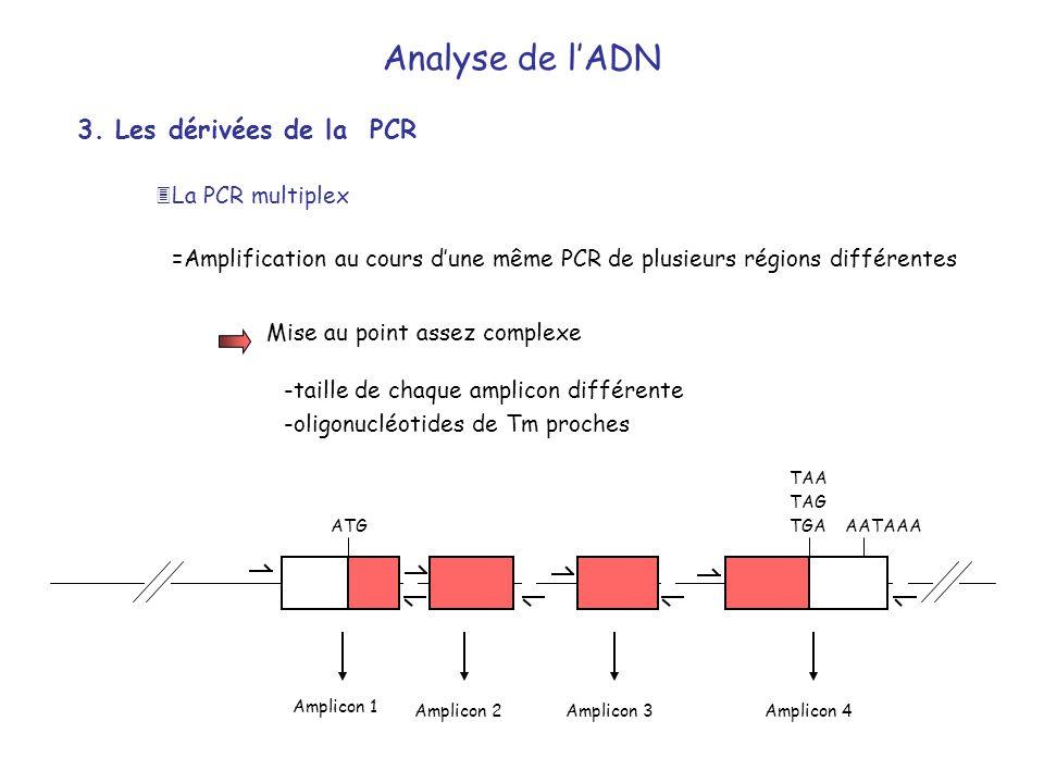 Analyse de l'ADN 3. Les dérivées de la PCR La PCR multiplex