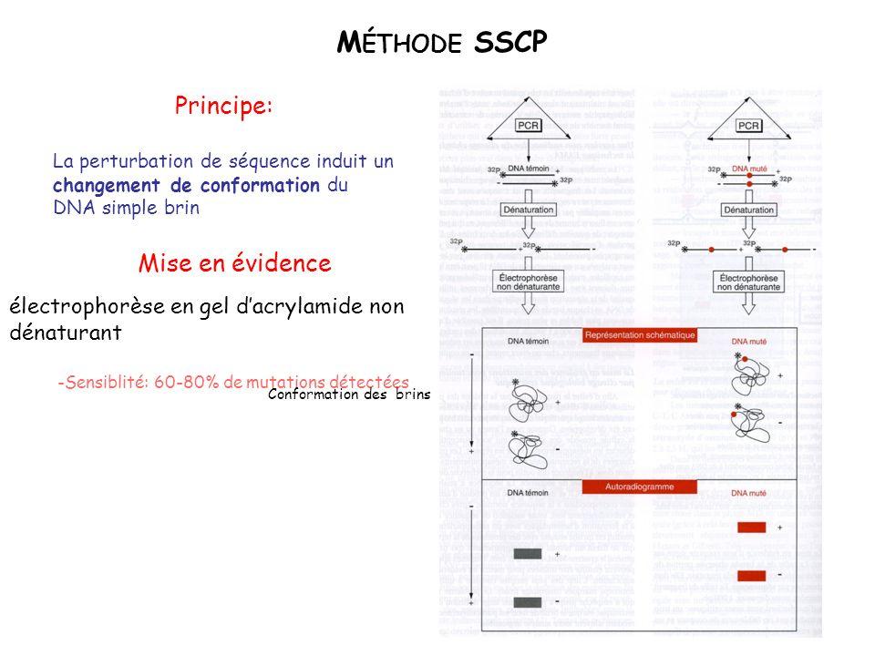 Méthode SSCP Principe: Mise en évidence
