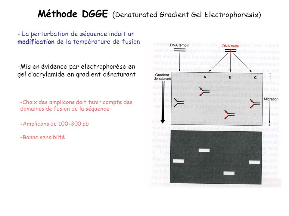 Méthode DGGE (Denaturated Gradient Gel Electrophoresis)