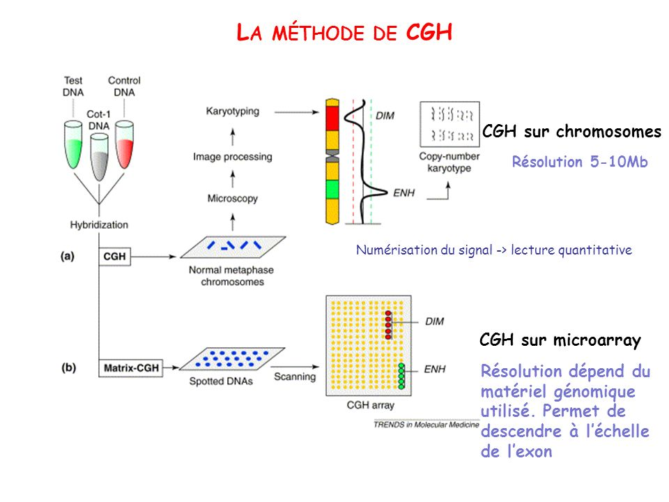 La méthode de CGH CGH sur chromosomes CGH sur microarray