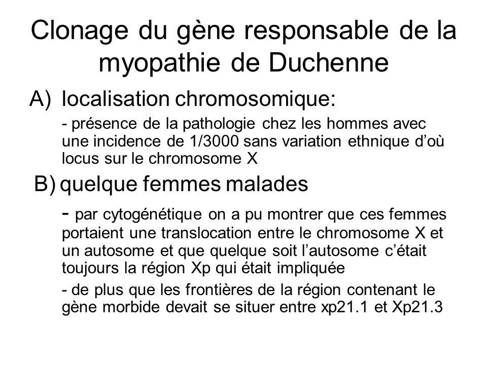 Clonage du gène responsable de la myopathie de Duchenne