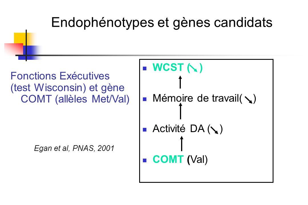 Endophénotypes et gènes candidats