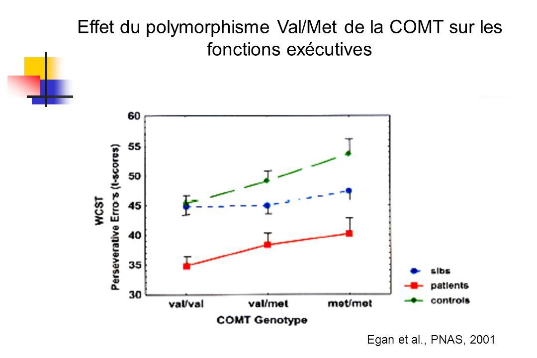 Effet du polymorphisme Val/Met de la COMT sur les fonctions exécutives
