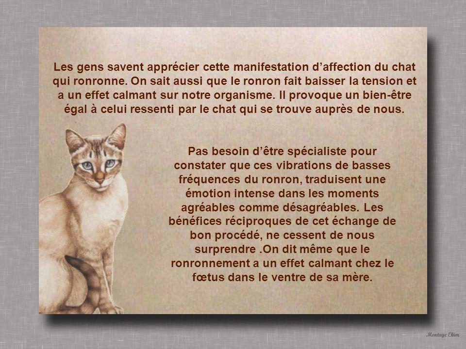 Les gens savent apprécier cette manifestation d'affection du chat qui ronronne. On sait aussi que le ronron fait baisser la tension et a un effet calmant sur notre organisme. Il provoque un bien-être égal à celui ressenti par le chat qui se trouve auprès de nous.