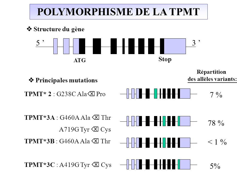 POLYMORPHISME DE LA TPMT