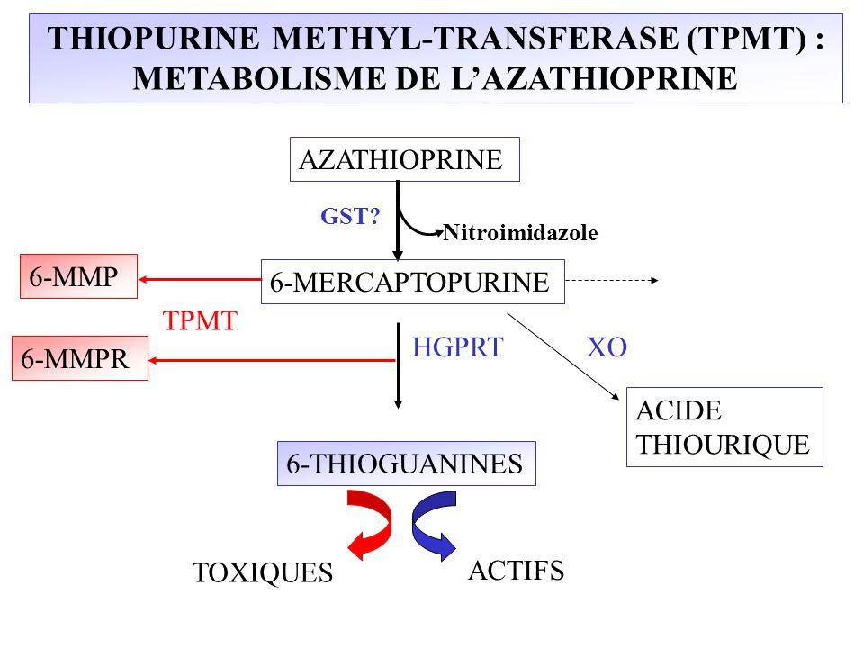 THIOPURINE METHYL-TRANSFERASE (TPMT) : METABOLISME DE L'AZATHIOPRINE