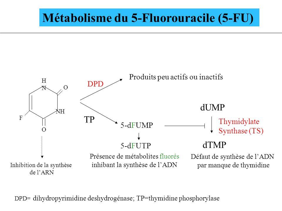 Métabolisme du 5-Fluorouracile (5-FU)