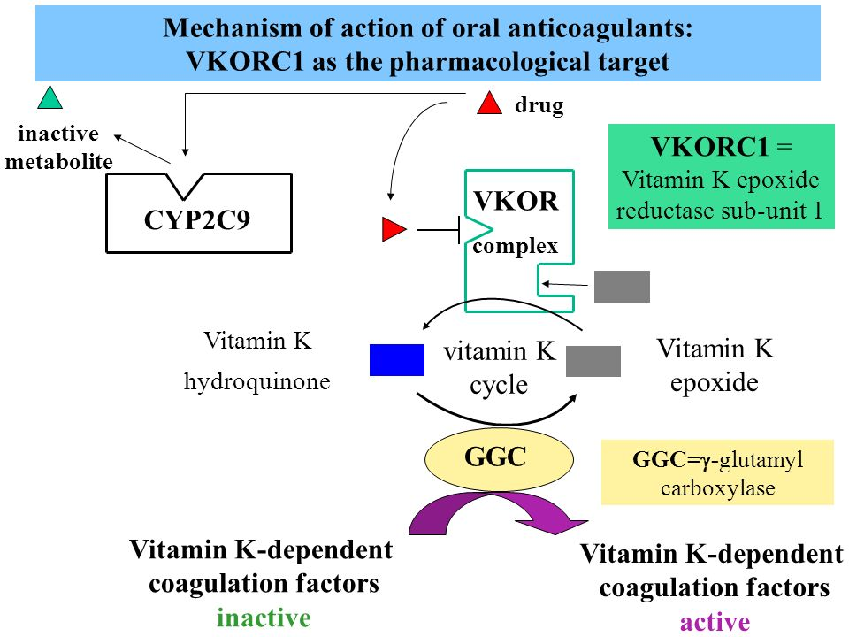 Mechanism of action of oral anticoagulants: