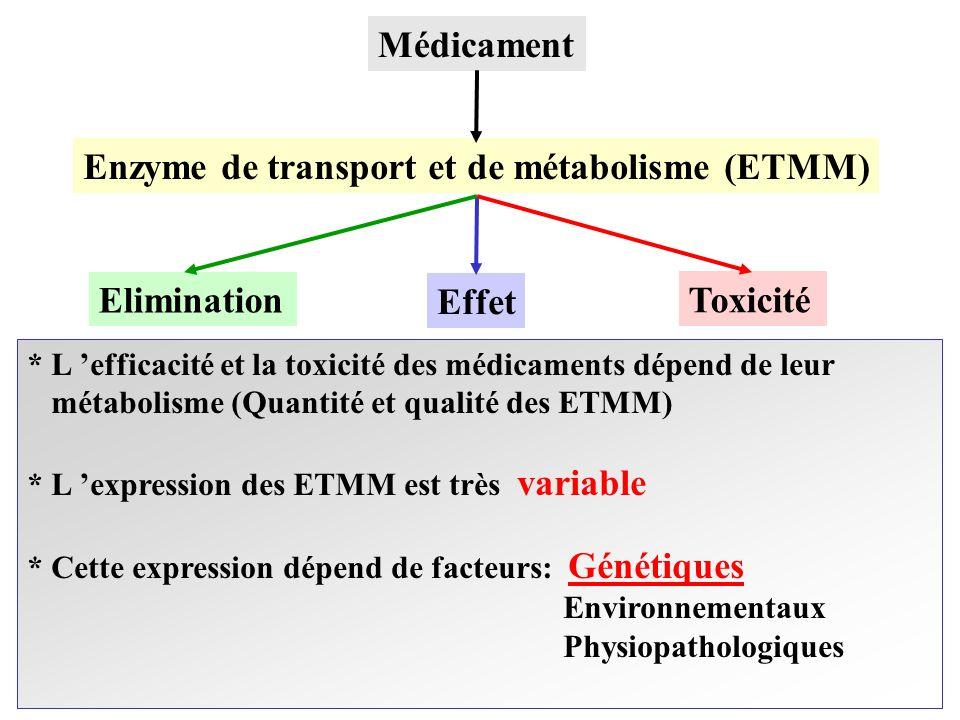 Enzyme de transport et de métabolisme (ETMM)