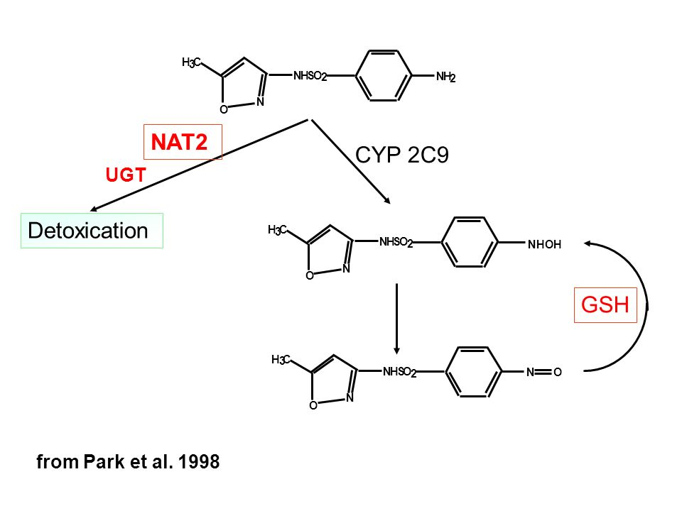 NAT2 CYP 2C9 Detoxication GSH UGT from Park et al. 1998 N O H S 2 3 C