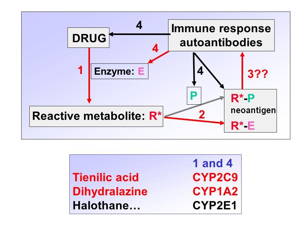 Immune response autoantibodies