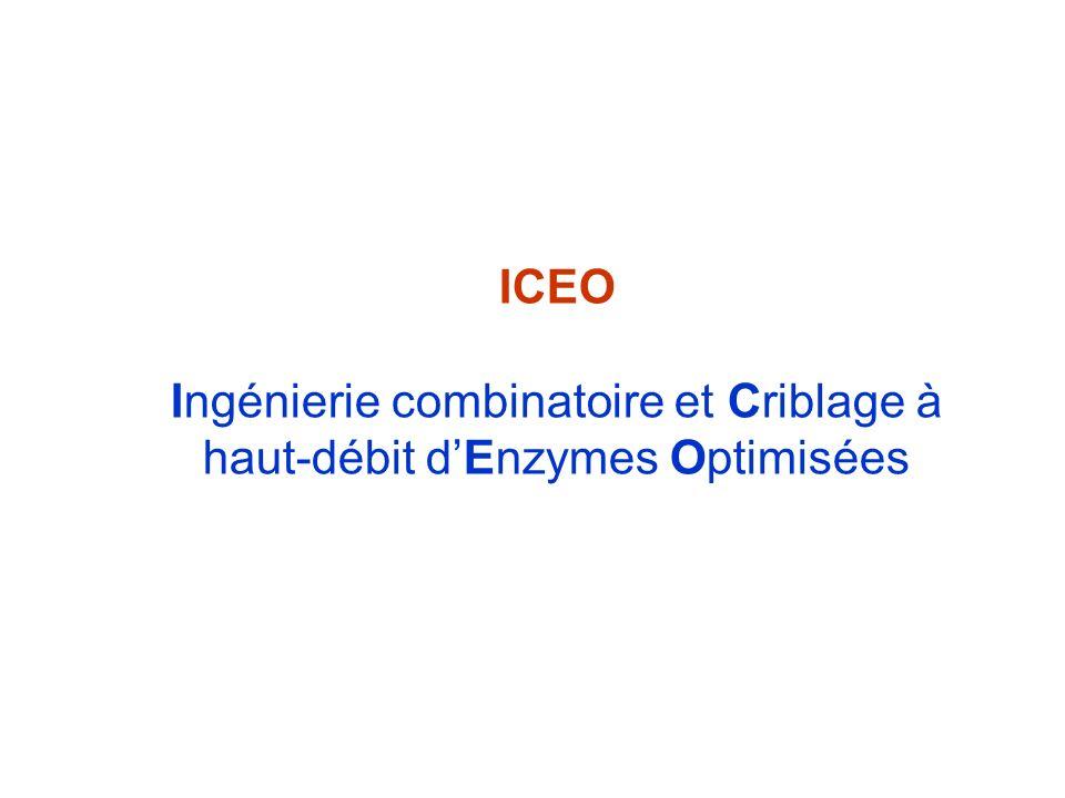 Ingénierie combinatoire et Criblage à haut-débit d'Enzymes Optimisées