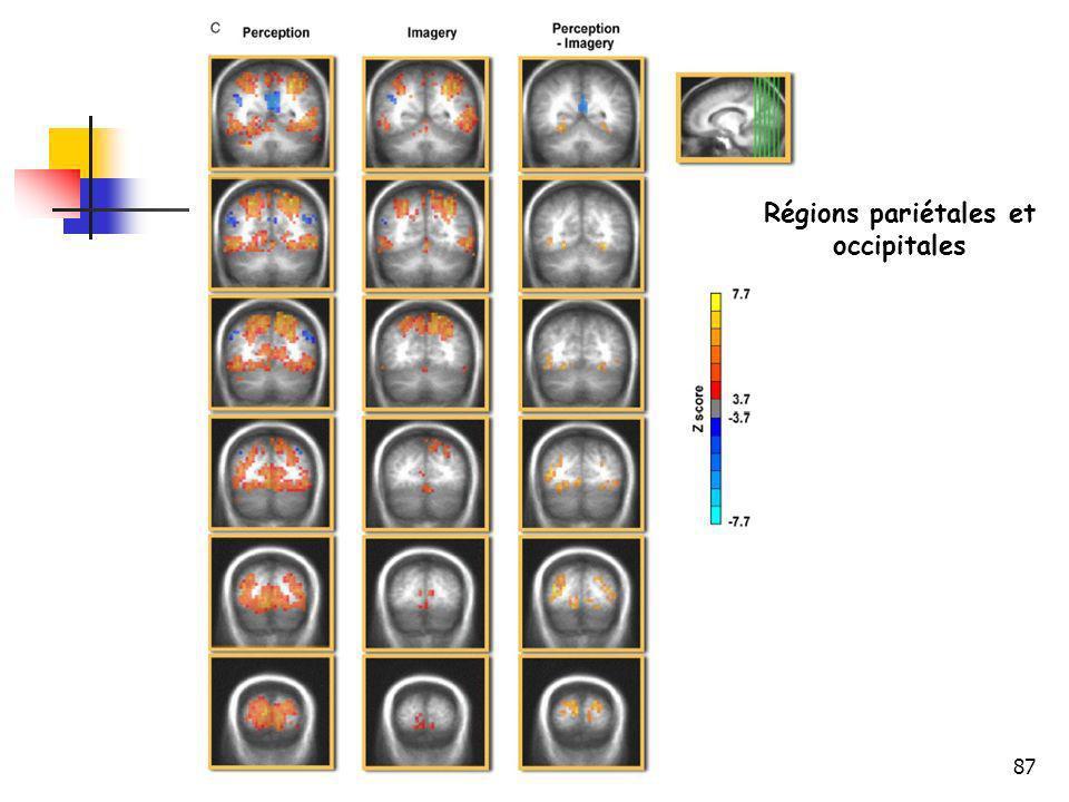 Régions pariétales et occipitales