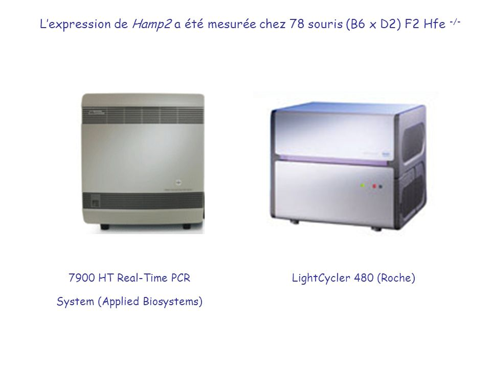 7900 HT Real-Time PCR System (Applied Biosystems)