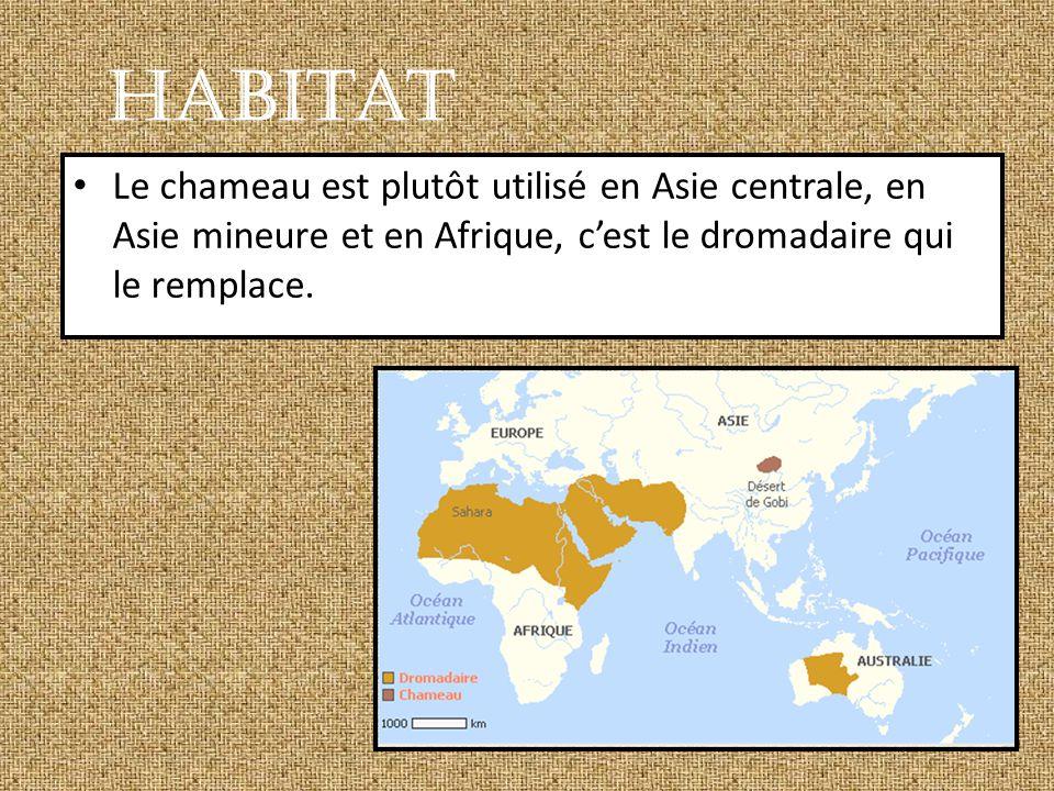 Habitat Le chameau est plutôt utilisé en Asie centrale, en Asie mineure et en Afrique, c'est le dromadaire qui le remplace.