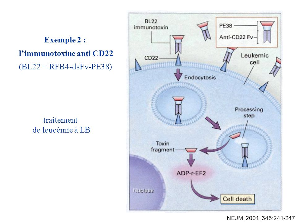 l'immunotoxine anti CD22