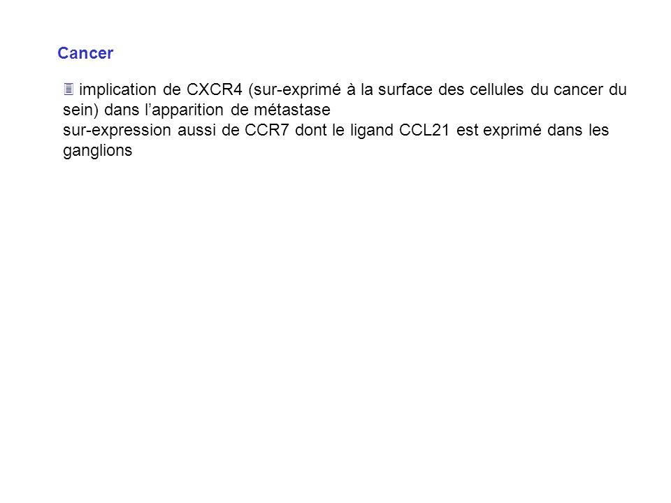 Cancer  implication de CXCR4 (sur-exprimé à la surface des cellules du cancer du sein) dans l'apparition de métastase.