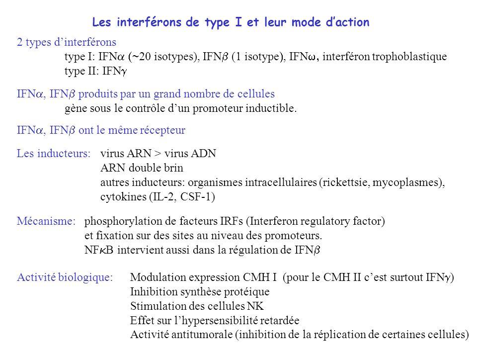 Les interférons de type I et leur mode d'action