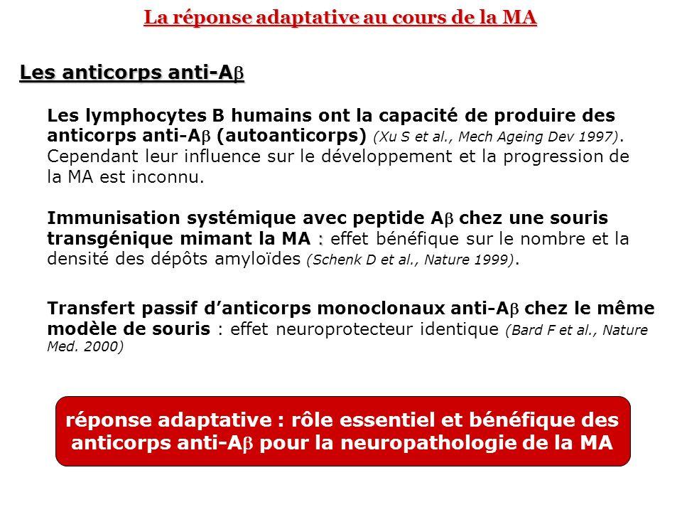 La réponse adaptative au cours de la MA
