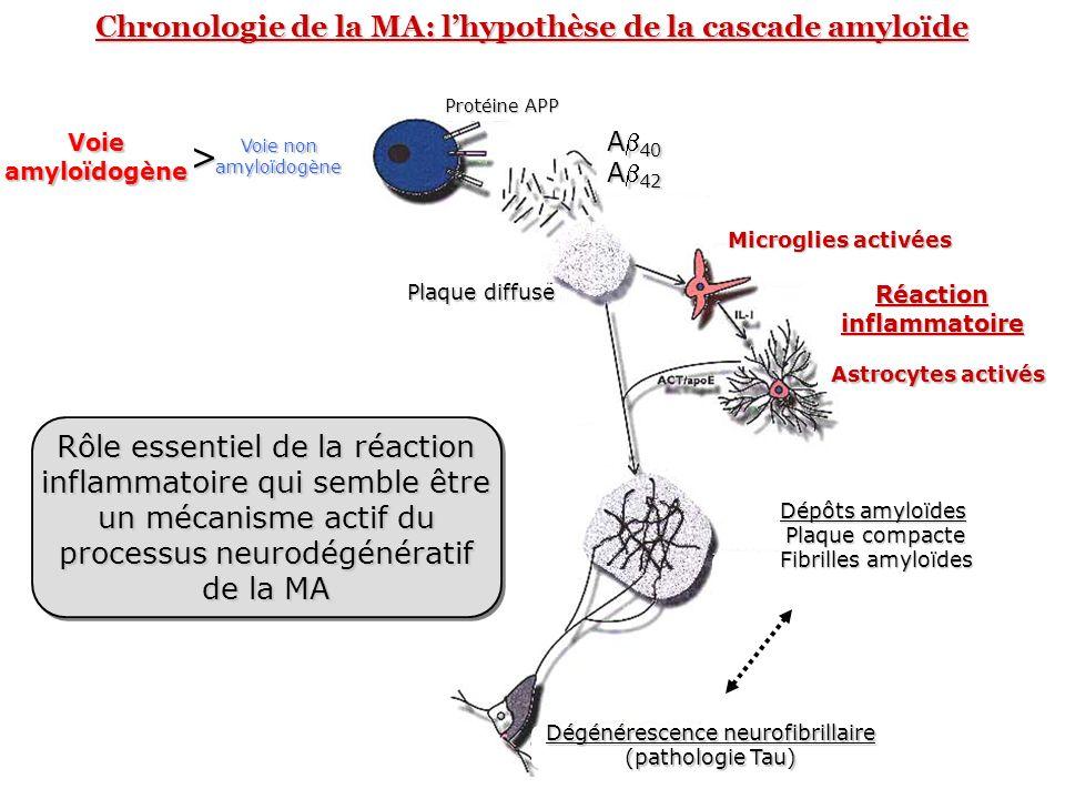 > Chronologie de la MA: l'hypothèse de la cascade amyloïde