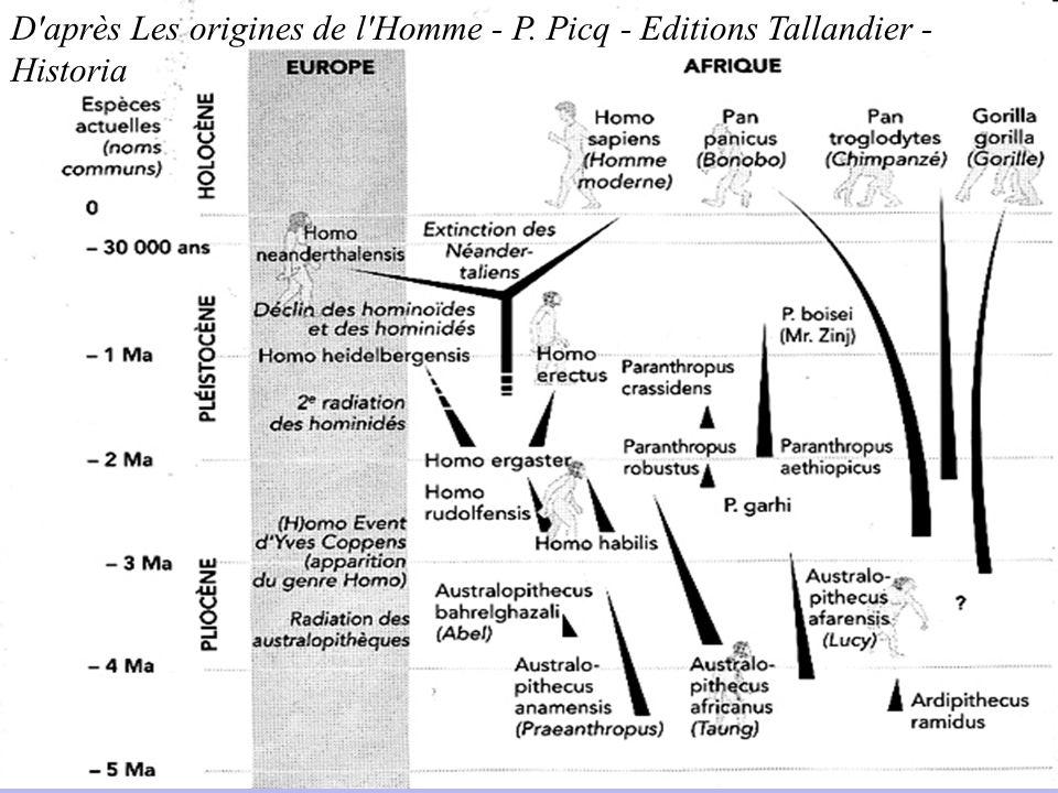 D après Les origines de l Homme - P
