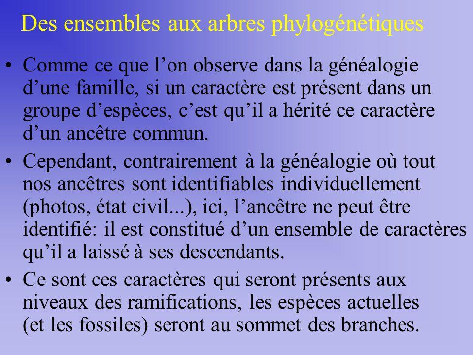 Des ensembles aux arbres phylogénétiques